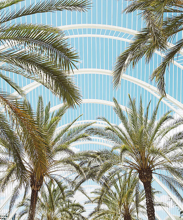 the palm trees at this venue are another top thing to do in valencia