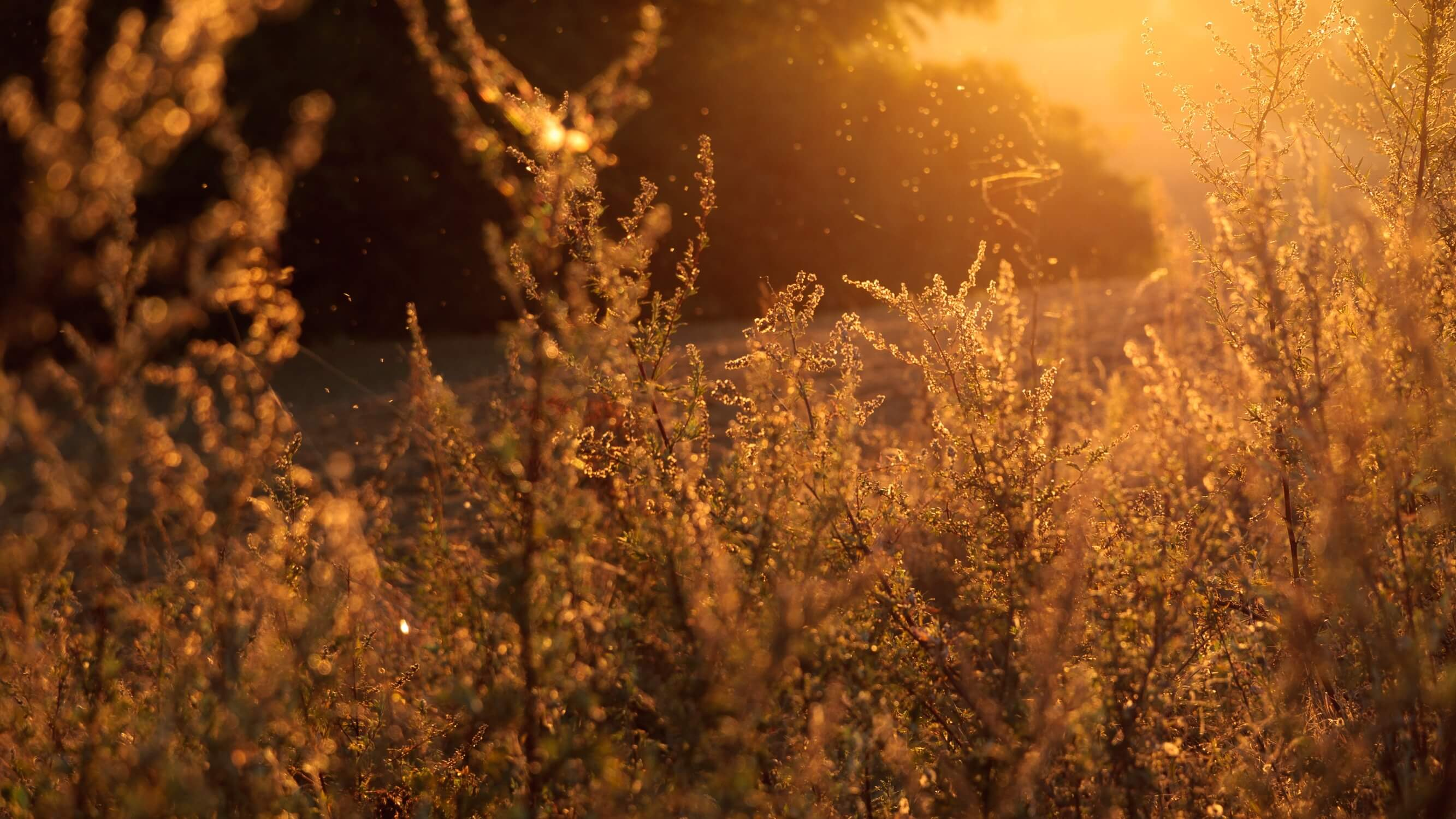 dust or hay allergies are common allergy types