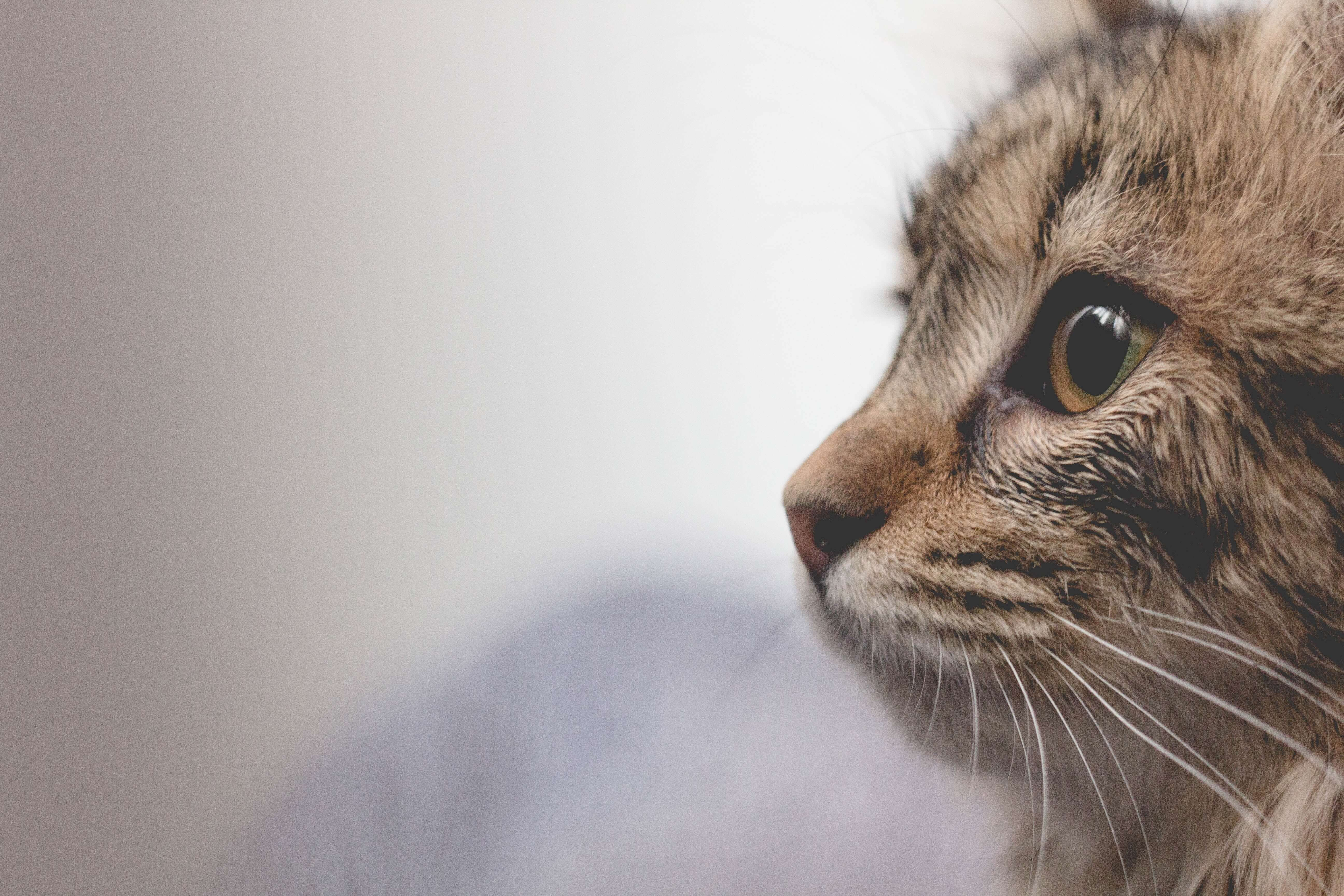 a cat or dog allergy is another one of the typical allergy types