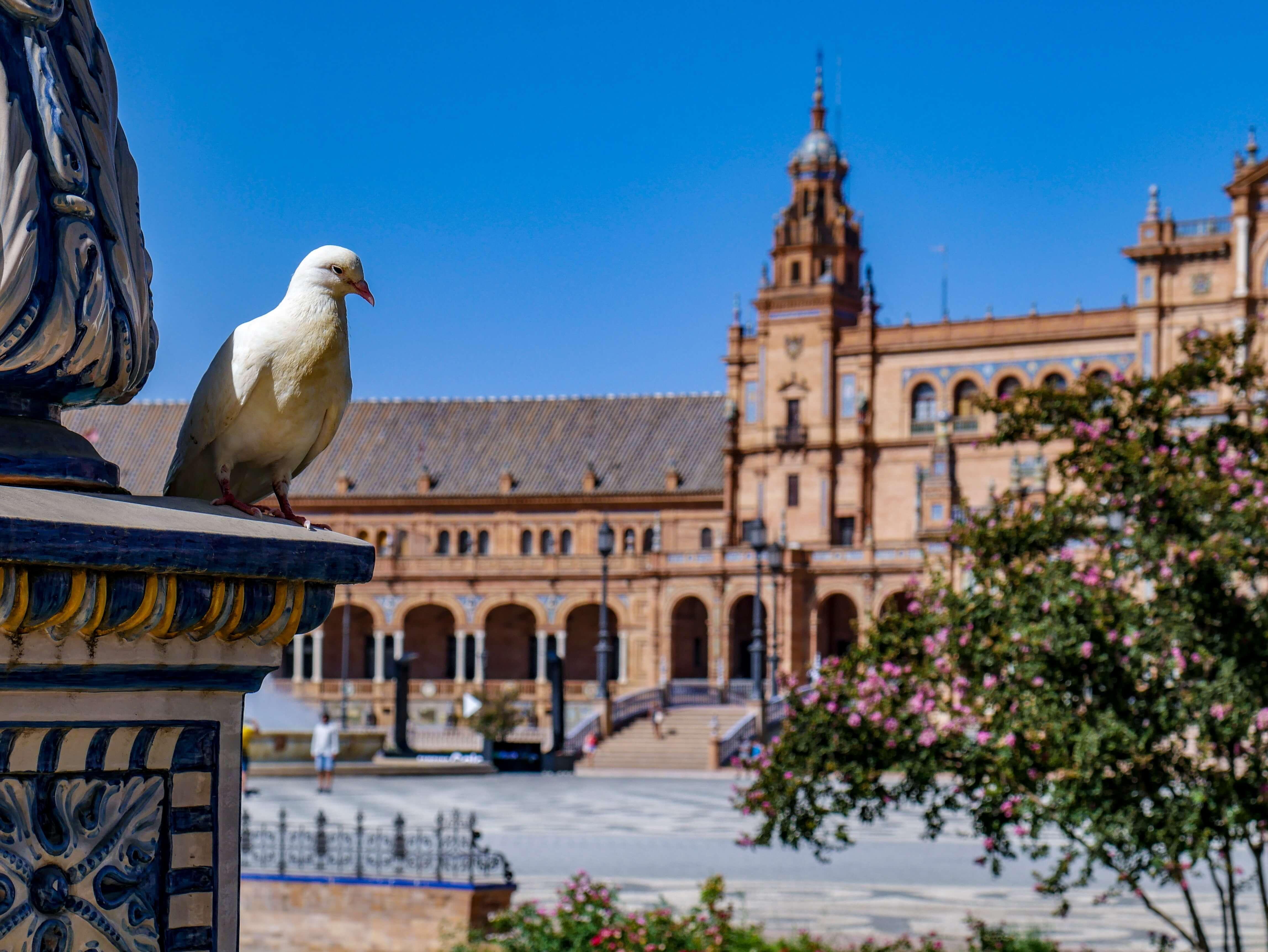 seville often ranks among the best expat communities in spain