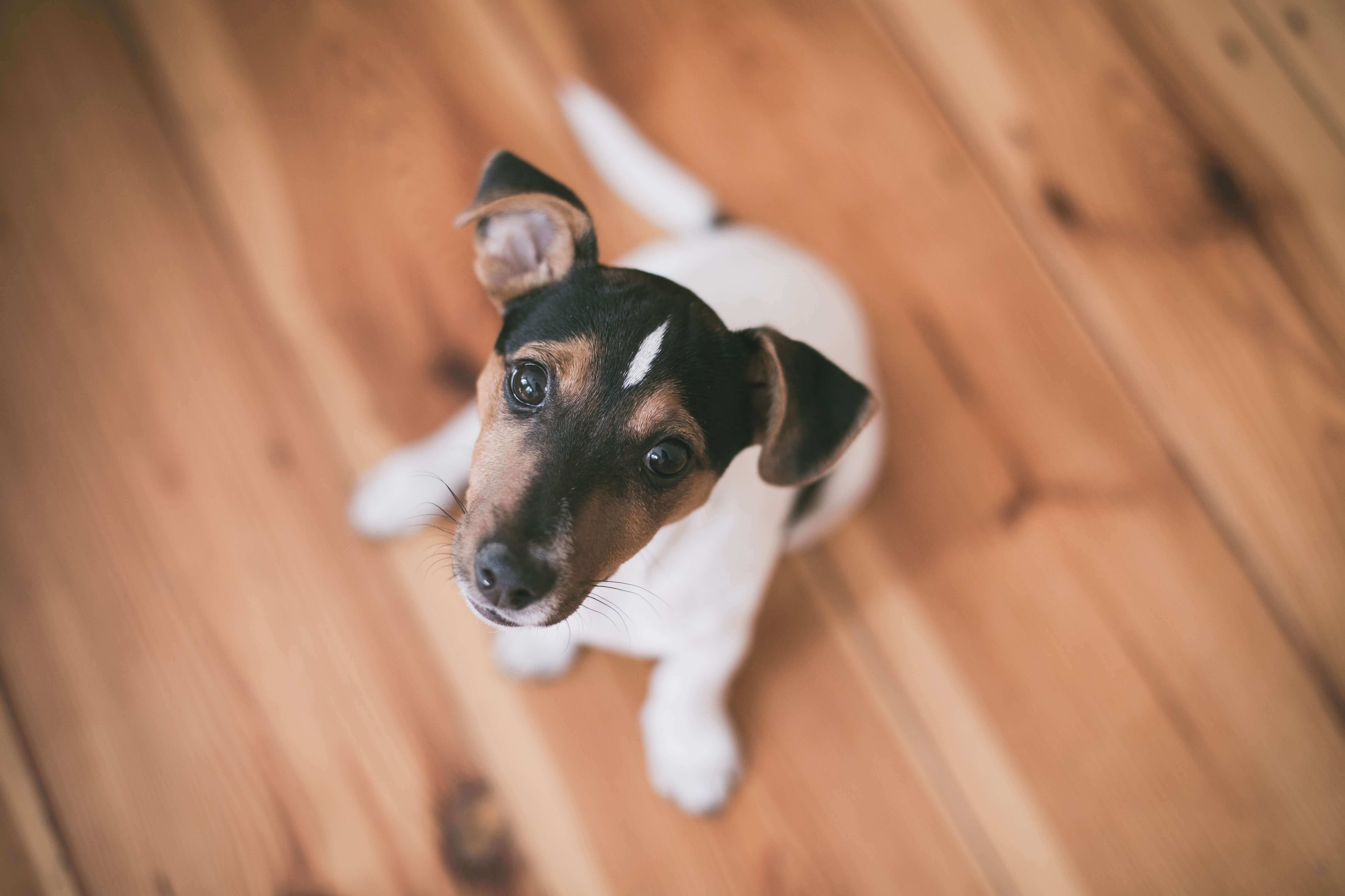 Owning a Dog in Spain: Cost, Registration & Dog Insurance