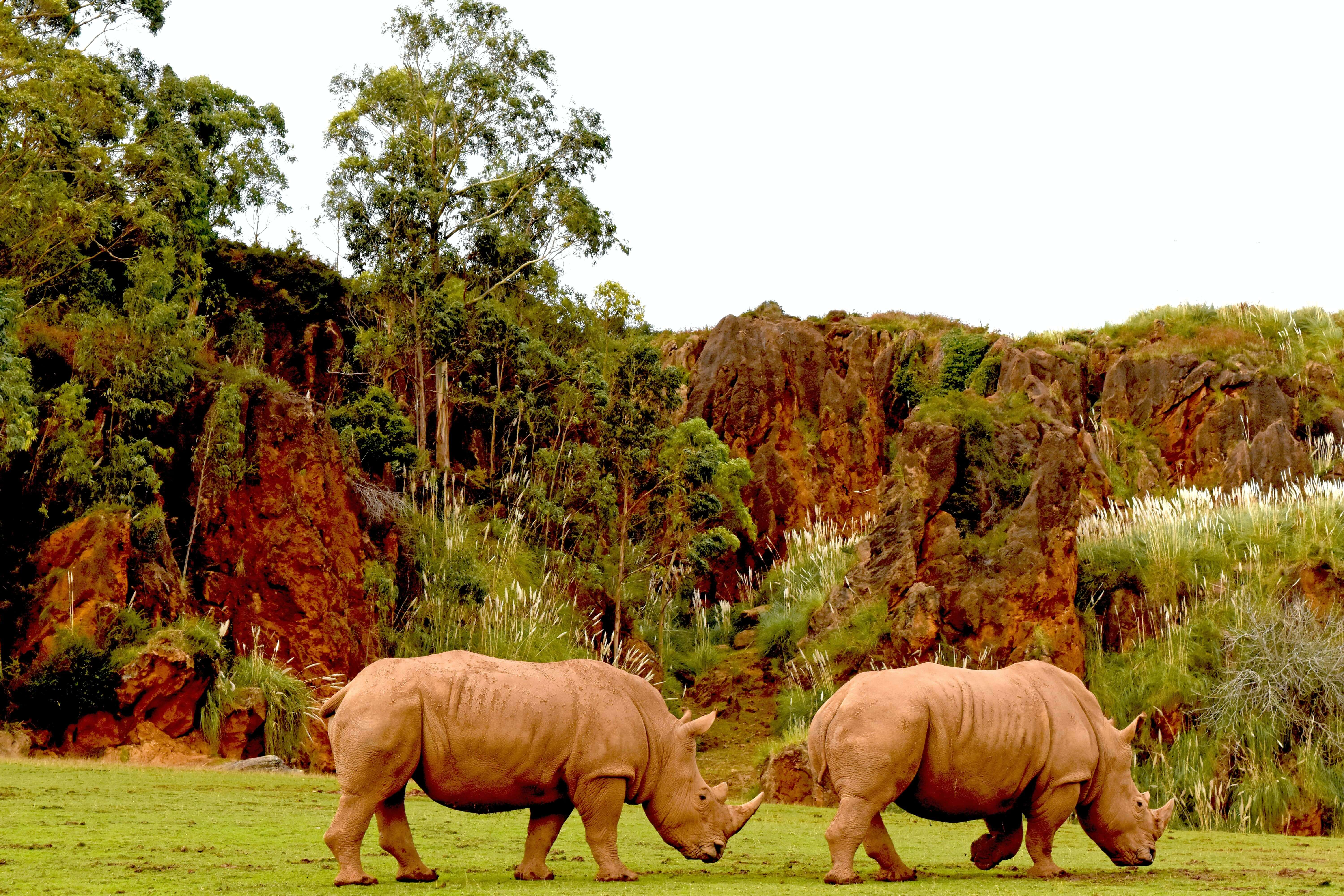 Caberceno is a safari park that's one of the best places to visit in spain with kids