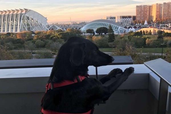 guide to valencia dog parks