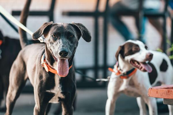guide to valencia dog-friendly restaurants