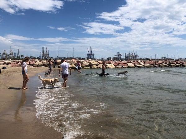 guide to valencia dog beaches